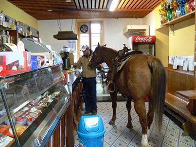 cavallo caffè